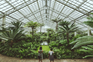 Jeff On The Road - Travel - Chicago - What to do - Garfield Park Conservatory - All photos are under Copyright  © 2017 Jeff Frenette Photography / dezjeff. To use the photos, please contact me at dezjeff@me.com.