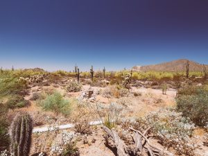 Things To Do In Phoenix — Usery Mountain Nature Center — Jeff On The Road — All photos are under Copyright  © 2019 Jeff Frenette Photography / dezjeff. To use the photos, please contact me at dezjeff@me.com.