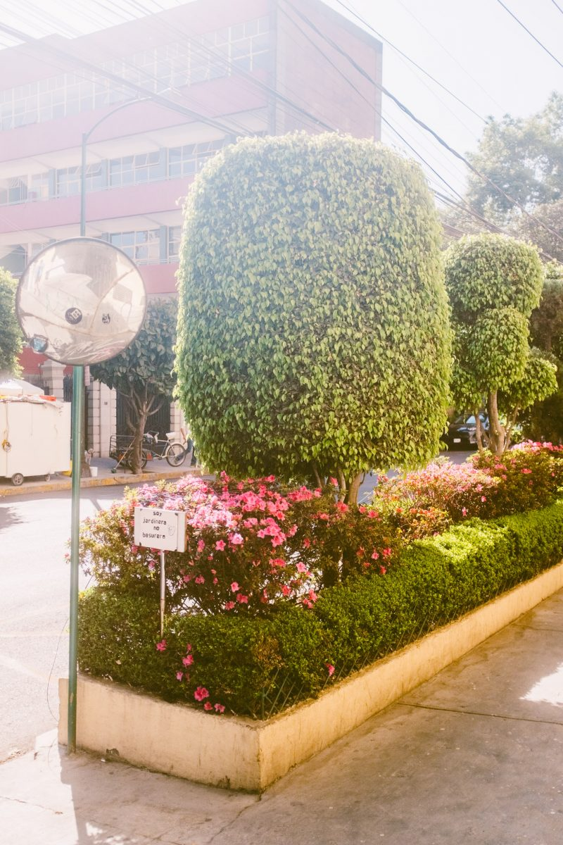 Walking around Juarez, La Condesa and Roma Sur - Travelling to Mexico City - Jeff On The Road - Jeff Frenette Photography